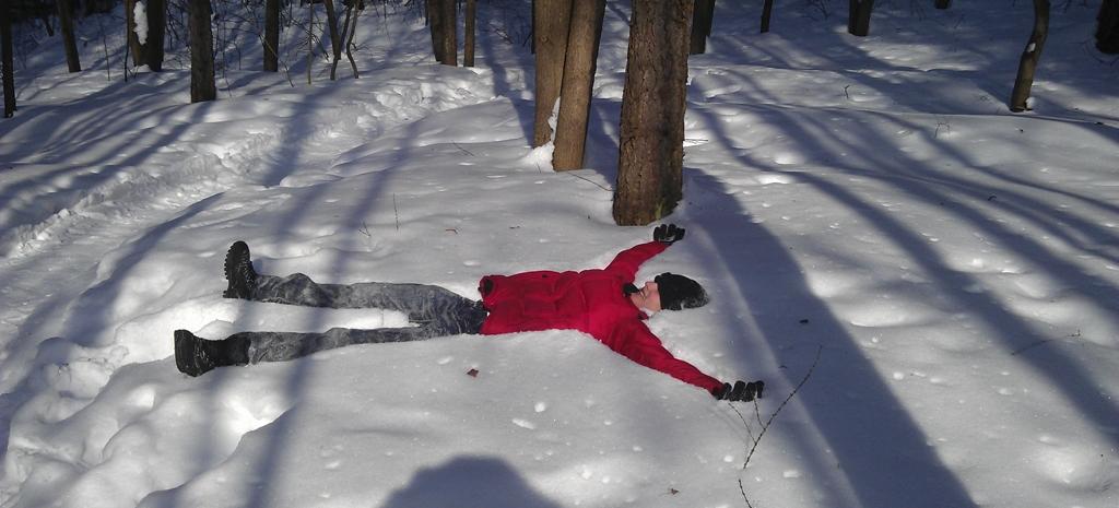 В Московском лесу зимой